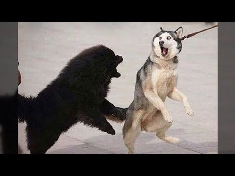 Funniest Animals - Awesome cute Pet Animals' Life Videos 1