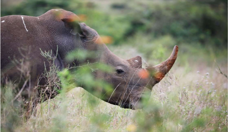 Namibia sees steady downward trend in rhino and elephant poaching 1