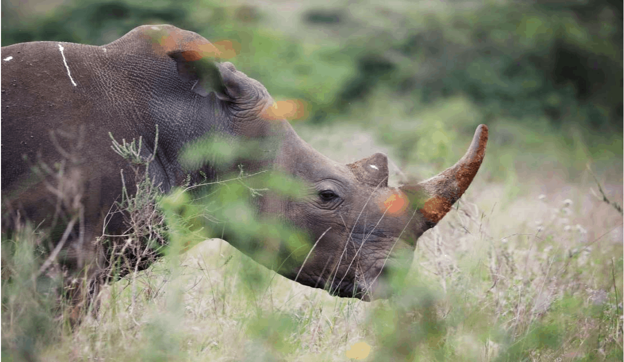 Namibia sees steady downward trend in rhino and elephant poaching 3