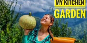 A new Culture || Agriculture || My Kitchen Garden|| 7