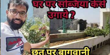Organic Vegetable Kitchen Gardening Tips For Gardening 4