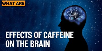 Effects of Caffeine on the Brain