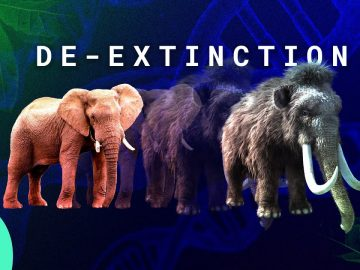 What Happens If We Solve Extinction?