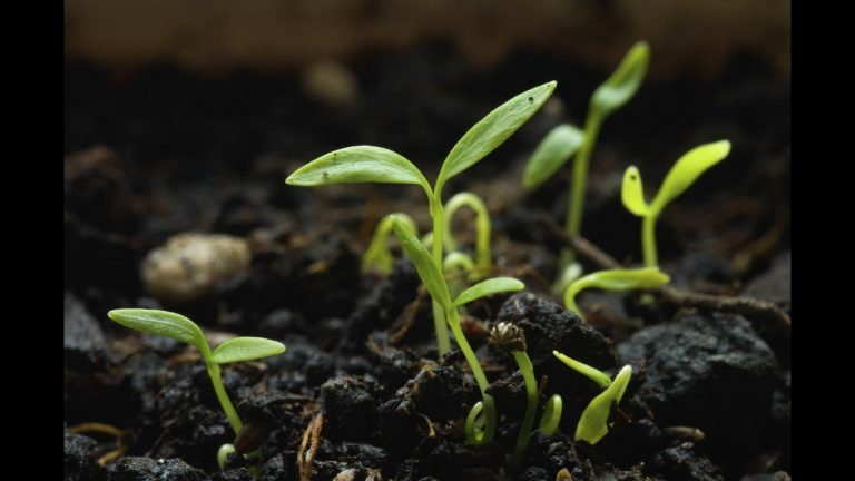 6 Major Tips To Start Any Seed -Complete Guide | Kitchen Gardening 1