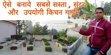 Cheap and Best Kitchen Garden 12