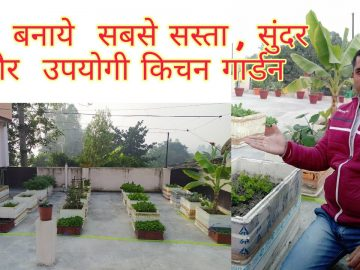 Cheap and Best Kitchen Garden 8