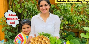 Kitchen Garden in England- AALU Nikalte hai aaj| Vegetable Garden Tour in England|The Sangwan Family 13