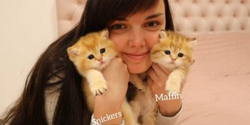 😽 Fur Babies | First month after birth | Kittens Muffin and Snickers 20