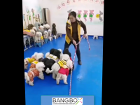 Animal Training 8