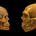 What happens when you replace a human gene with its Neanderthal version? 3