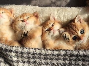 Time for Relaxation, Purring and Sleep   Cute Baby kittens