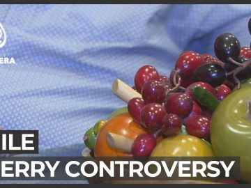 Cherry controversy: Chile's fruit growers impacted by 'rumour'