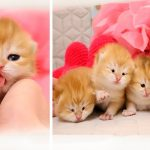 😍 12 Days After Birth | Adorable Cutie Baby Kittens | Video 2020 Compilation 1