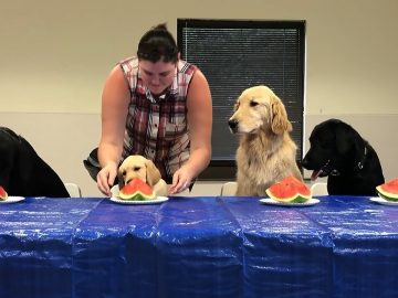 Puppies try watermelon for the first time ever