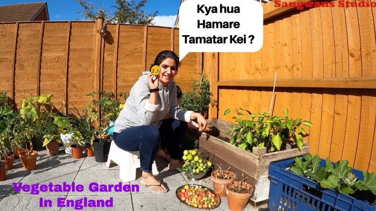 Our Tomato plants are Finished Now because of 😢 Kitchen or Vegetable Garden  The Sangwan Family 1