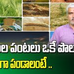 DIFFERENT TYPES OF SEEDS IN ONE PLACE | PERATI THOTA AND KITCHEN GARDENING TIPS | SUMANTV RYTHU 1