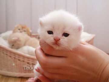 😍 17 Days After Birth | Adorable little kittens opened eyes and meows 7