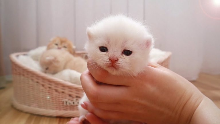 😍 17 Days After Birth | Adorable little kittens opened eyes and meows 1