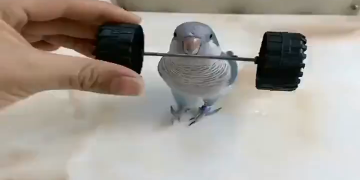A Well Trained Parrot 4