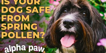 How To Keep Your Dog Safe This Spring