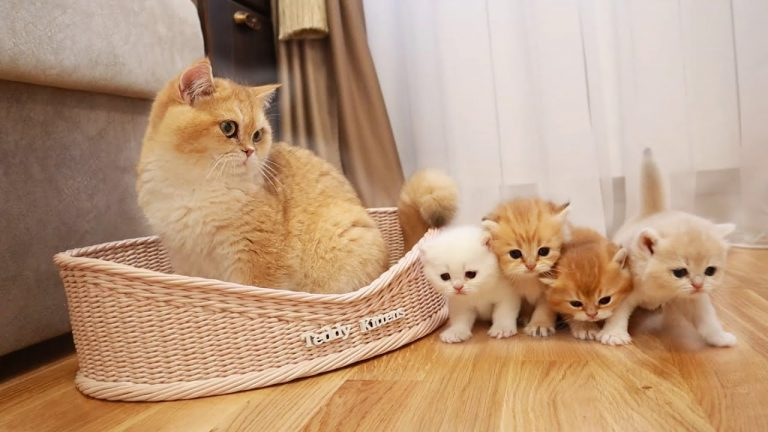 Cat Akai MEETS his small sisters and brothers 🐈 1