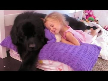This little girl and her giant Newfoundland will make your day brighter