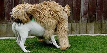 Funniest Dogs 😹 - Best Of The 2021 Funny Dogs Videos 😁 - Funniest Animals Ever 13