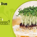 Kitchen Gardening | How To Grow Microgreens Seeds? | nurserylive 1