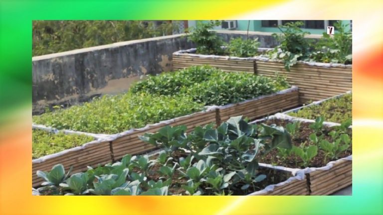 How To Setup Rooftop Kitchen Garden | (Step By Step Instructions) 1