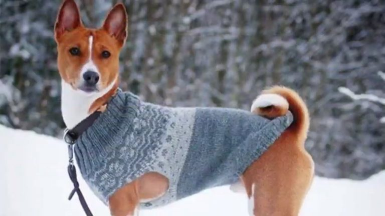 Top 10 Most Quiet Dog Breeds In The World