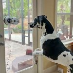 Great Dane Hilariously Chats With Window Glass Cleaning Robot