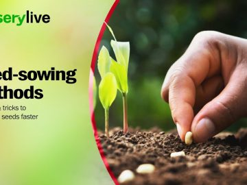 Kitchen Gardening | Seed Sowing Methods With Tips And Tricks To Germinate Seeds Faster | nurserylive 4