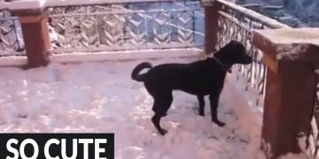 Dog goes absolutely nuts after discovering snow for the first time!