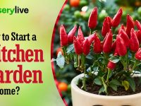 Kitchen Gardening | How To Start A kitchen Garden At Home? | nurserylive 6