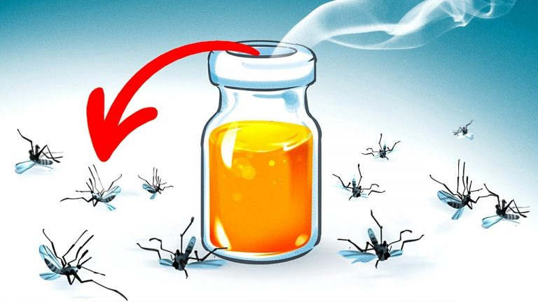 15 Natural Ways to Get Rid of Mosquitoes in Your Yard