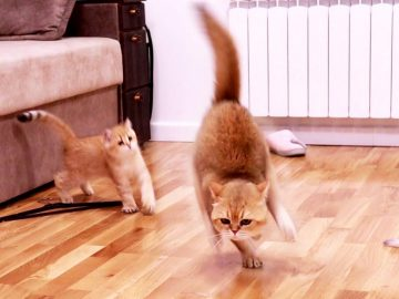 Cat - William plays with his kittens 😂 9