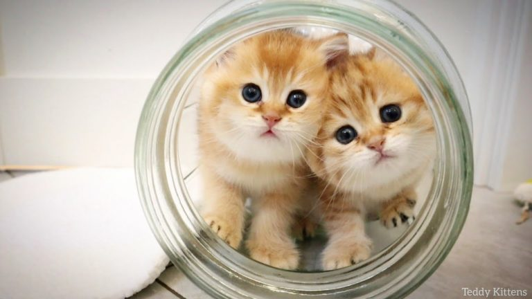 Two tiny kittens playing in a big jar