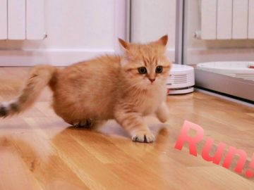 Kittens' reaction to a robot vacuum cleaner 🙀 Funny 5