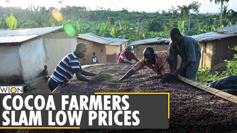 The bitter truth behind chocolate production | Chocolate giants | Cocoa Farming | WION News