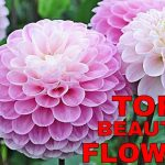 Top 10 Most Awesome Beautiful Flowers In The World