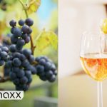 Wine from Norway? How Climate Change Makes Norway a Wine Country   Norwegian Wine   DW Euromaxx