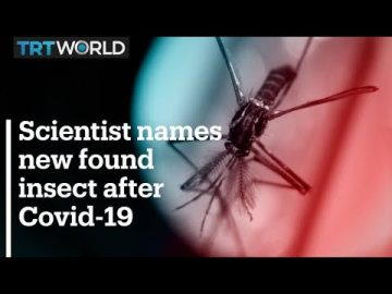 Scientist names newly discovered insect after coronavirus