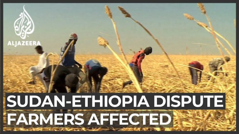 Conflict on Sudan's border with Ethiopia hurts farming industry