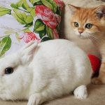 😲 What is it?! Kittens Artist and Arnold want to be friends with a fluffy eared cloud.☁️🐇 3