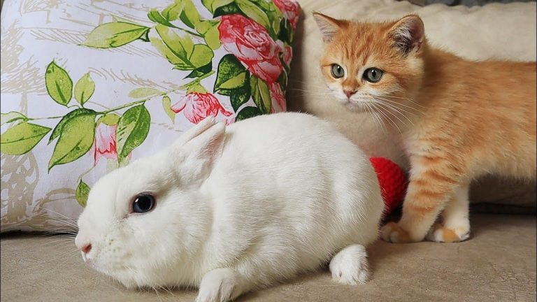 😲 What is it?! Kittens Artist and Arnold want to be friends with a fluffy eared cloud.☁️🐇 1