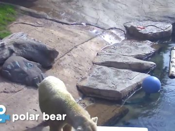 Zoo Cam - Polar Cam Episode 4