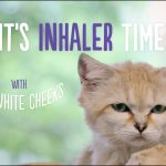 Inhaler time with Mr. White Cheeks