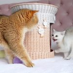You are Not my Father! Cat William was not accepted by his daughter Milky 😔😀 2