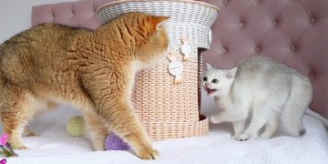 You are Not my Father! Cat William was not accepted by his daughter Milky 😔😀 7
