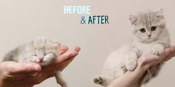 ✔️ HOW Baby Kitten Amelia GROW: 0-12 Weeks! 😍 BEFORE & AFTER 5
